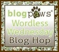 BlogPawsWedButton