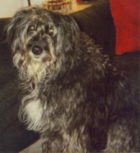 Sheeba, May 2001