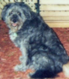 Sheeba. Jul. 2003