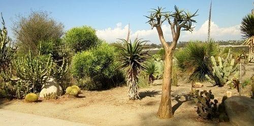Cactus garden 1