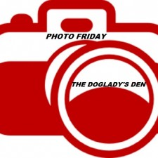 Photo Friday, The Doglady's Den