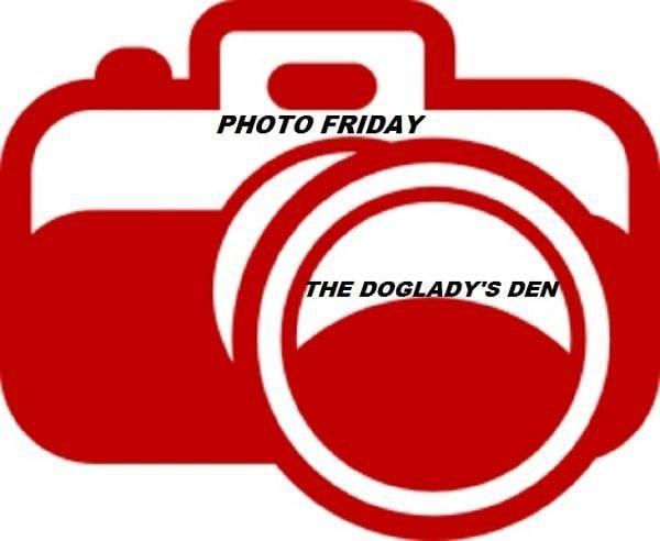 Photo Friday, The Doglady's Den