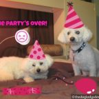 The party's over, #MONDAYMUSINGS, The Doglady's Den