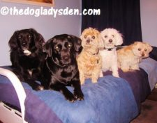 Thoughts on Dog Breeding
