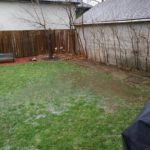 swampy backyard, January Blues and Blahs